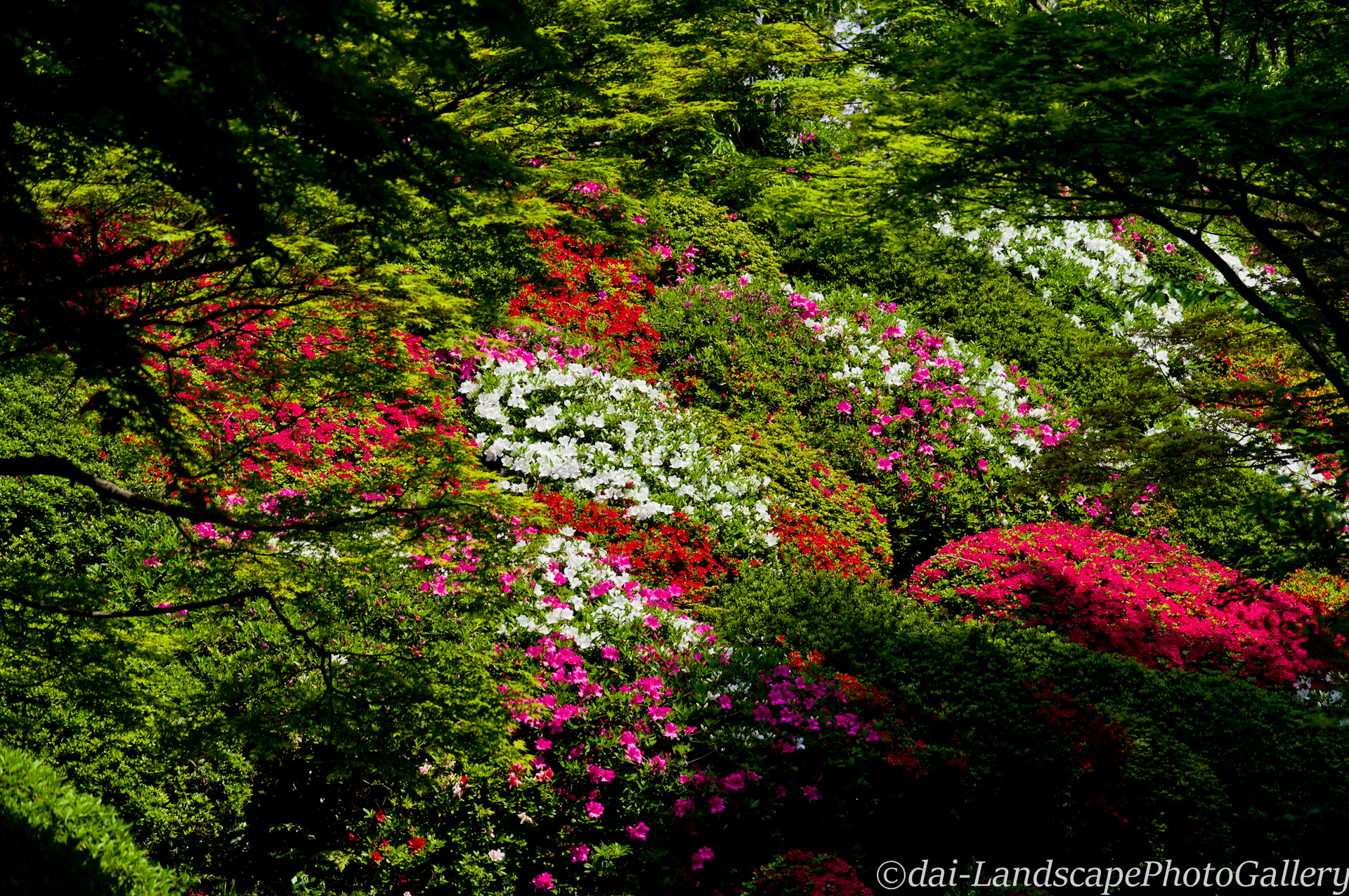 春の石山寺