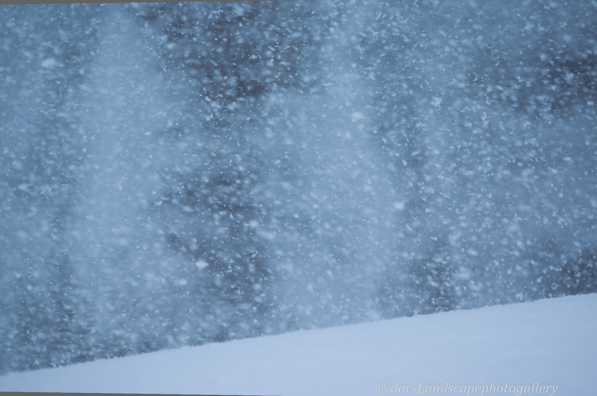豪雪の森にて