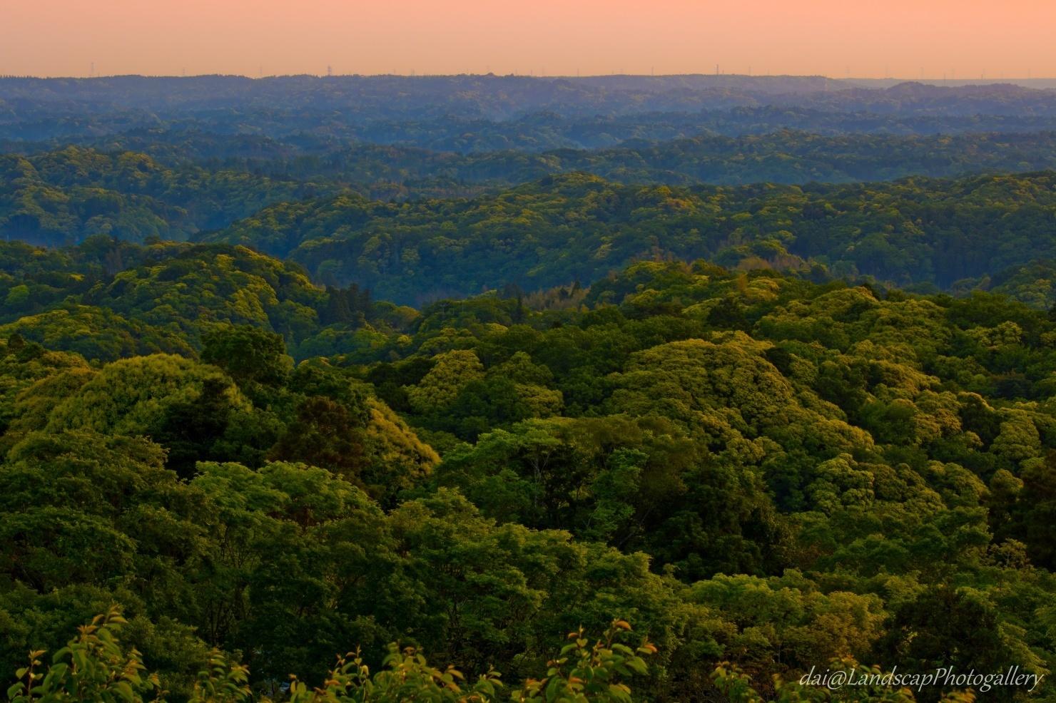 常緑広葉樹林の朝景