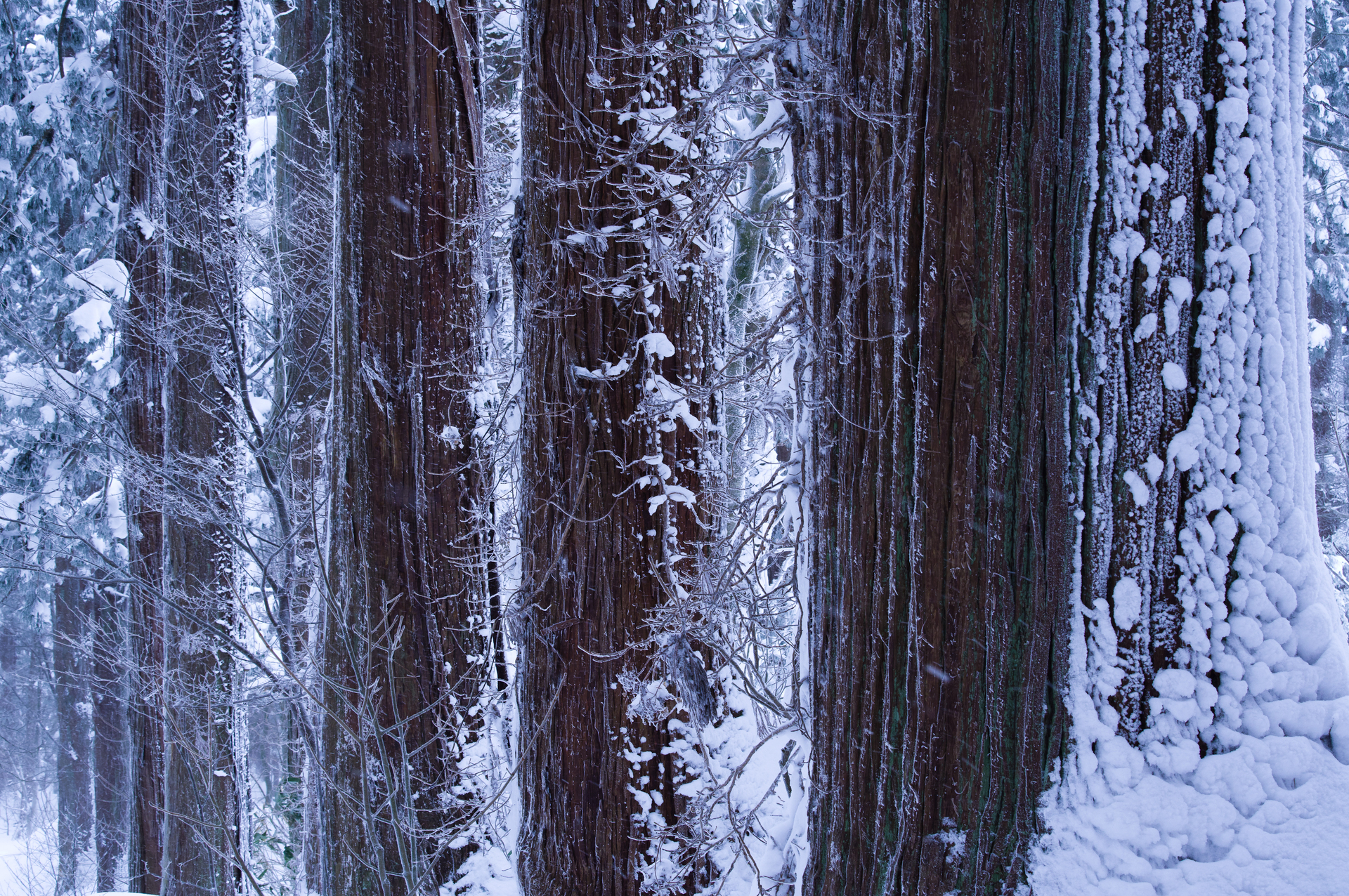 厳冬の羽黒山杉並木