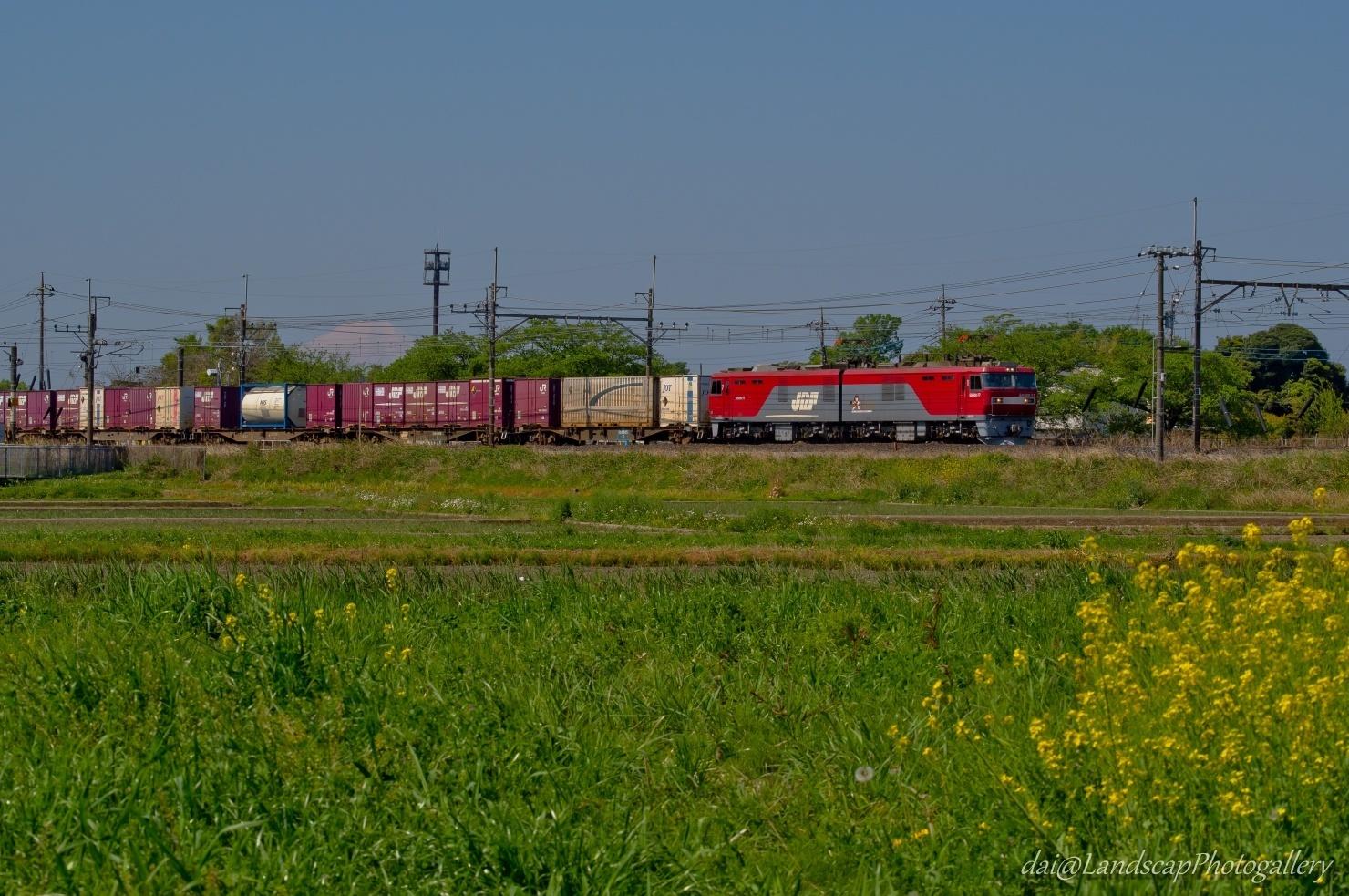 菜の花と富士山と貨物列車