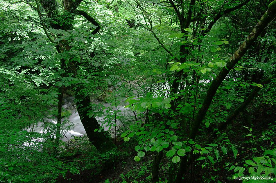 日原街道風景 深緑の日原渓谷