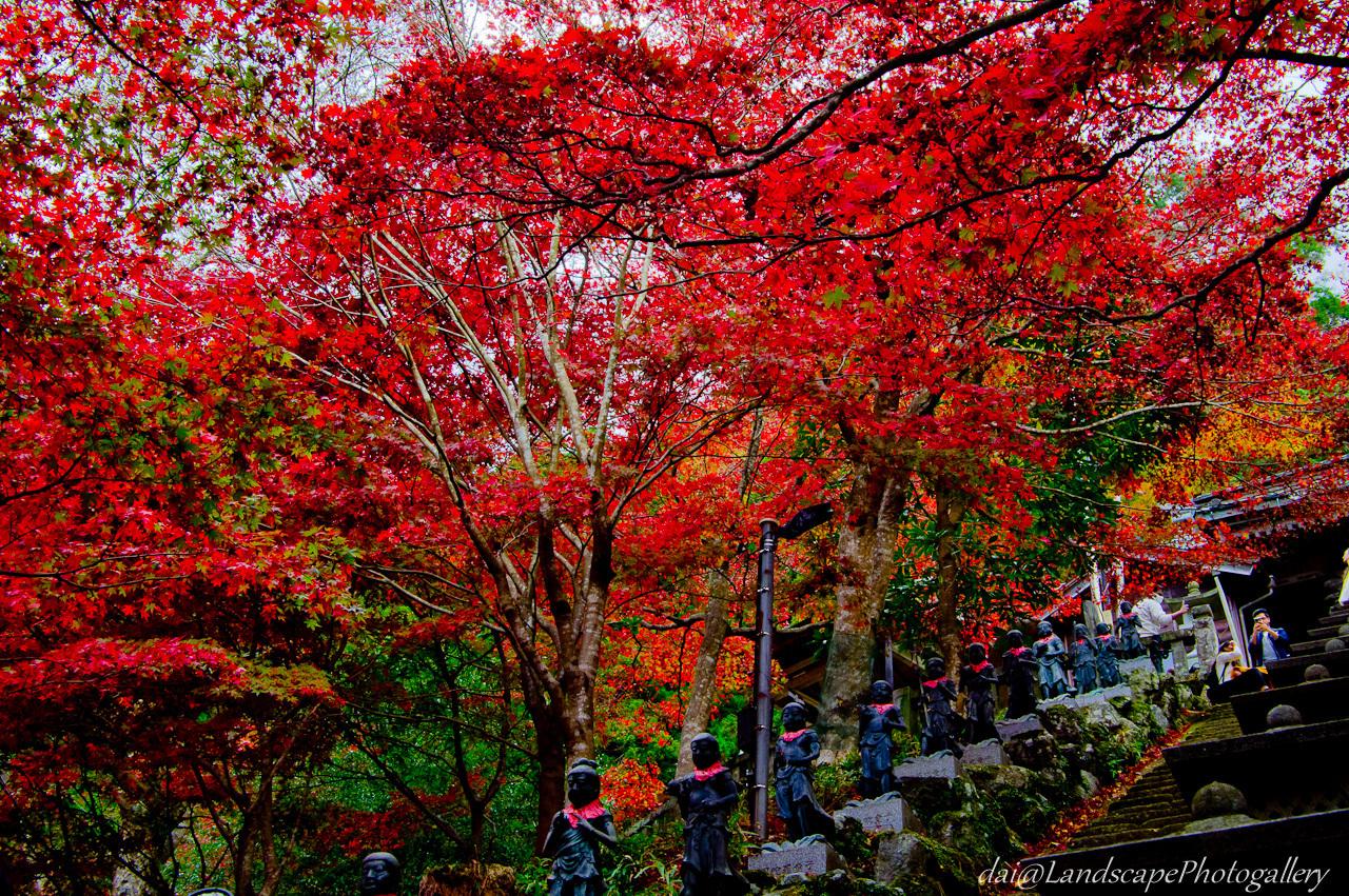 大山寺参道の紅葉