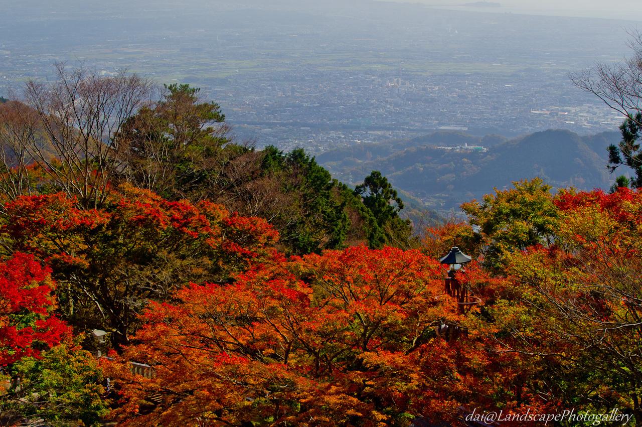 阿夫利神社の紅葉