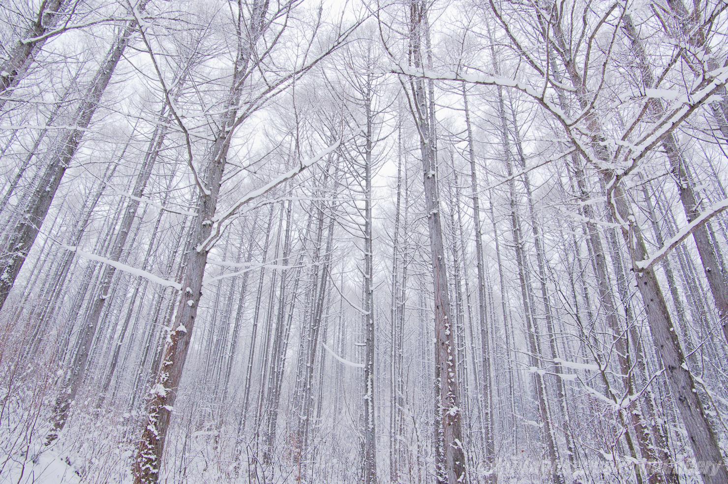 冬の山之村の森