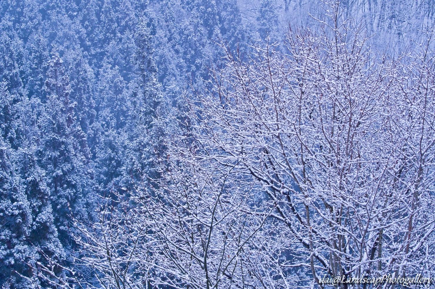 淡雪積もる木々