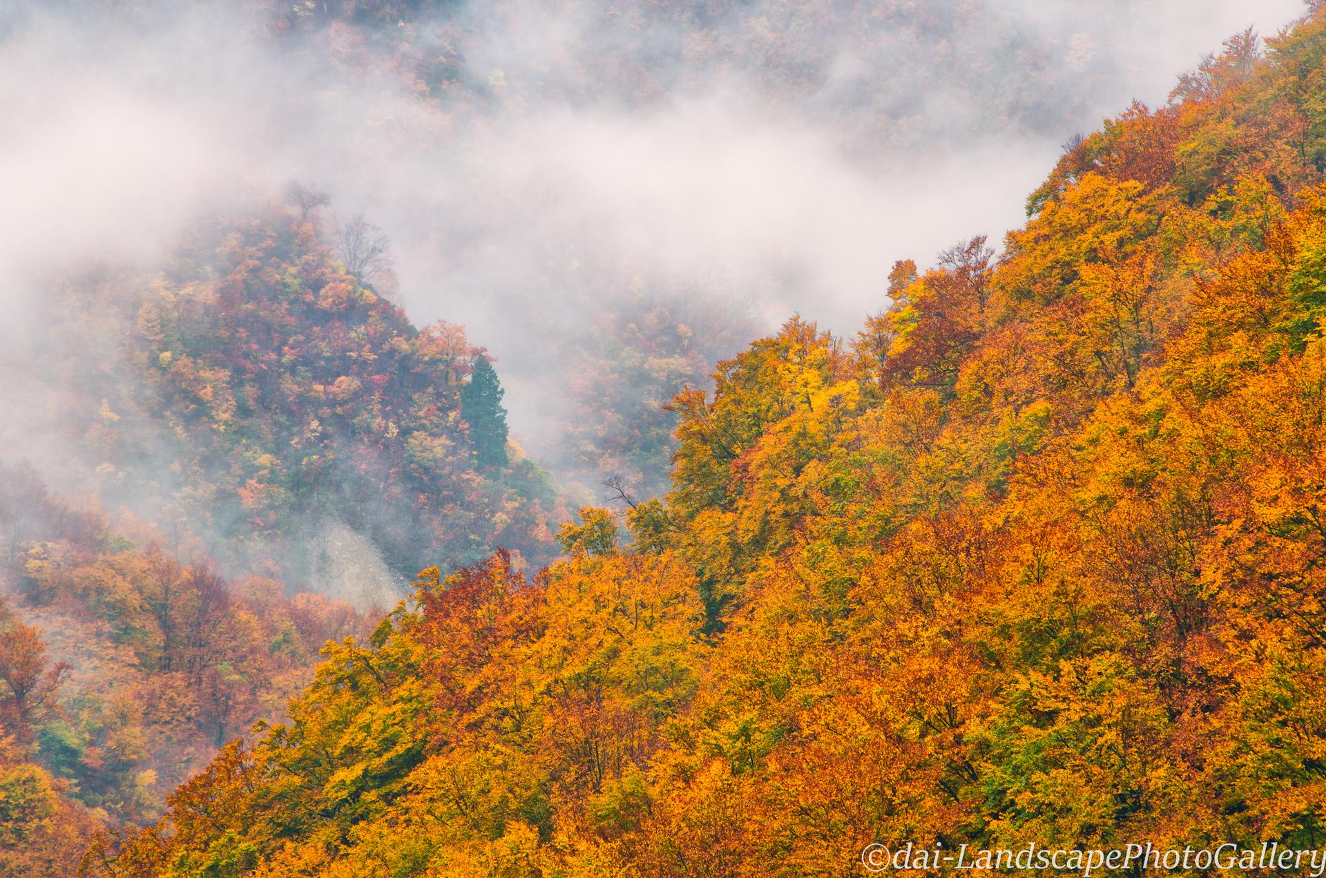富山桂湖周辺の紅葉風景