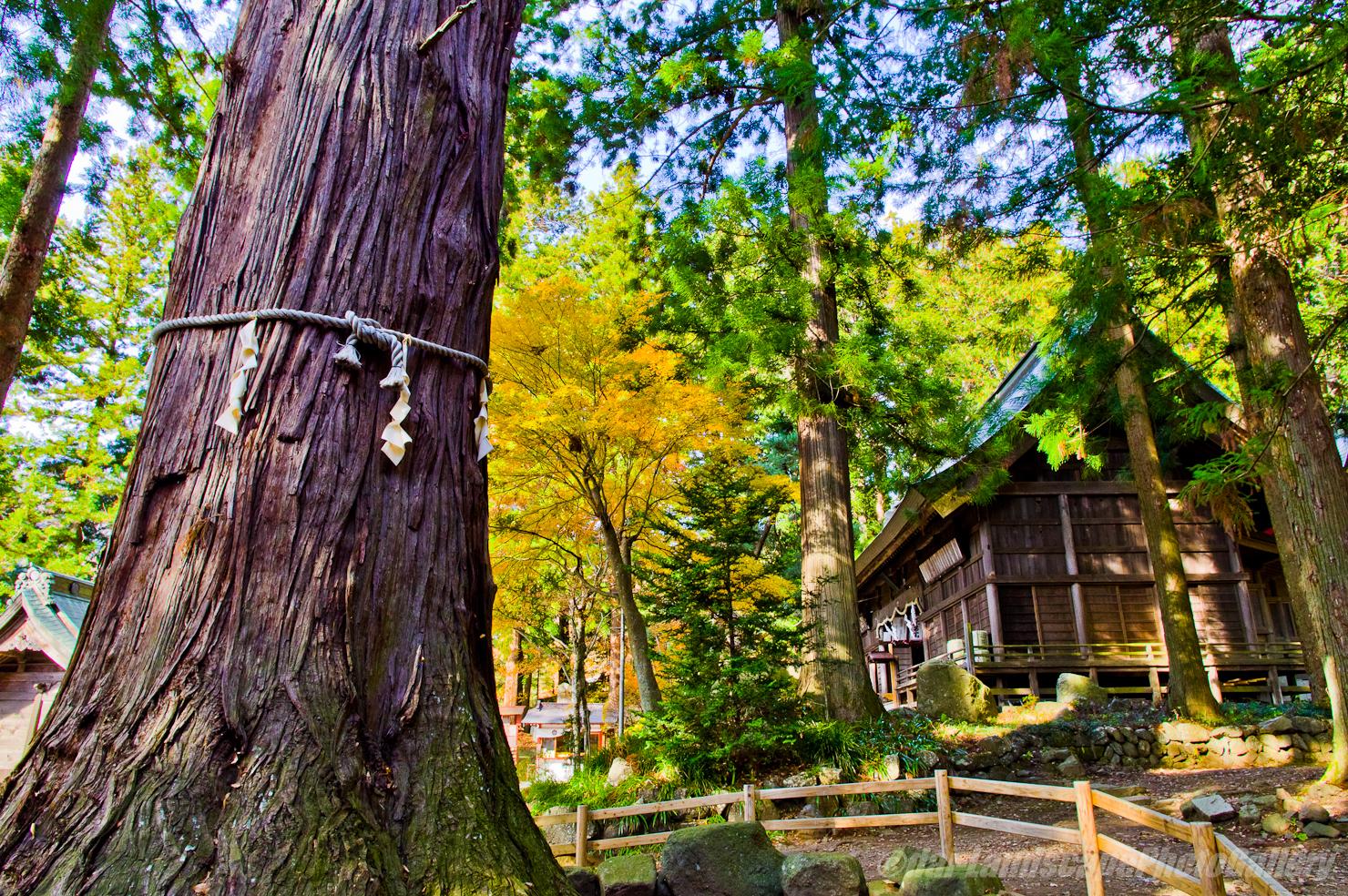 秋の河口湖浅間神社