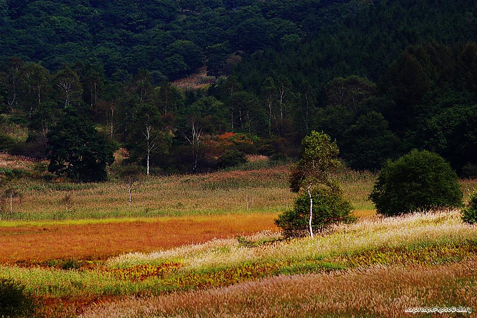 初秋の踊り場湿原