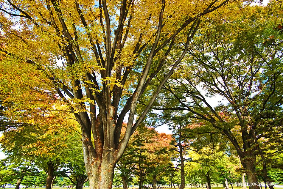 皇居外苑周辺の紅葉風景