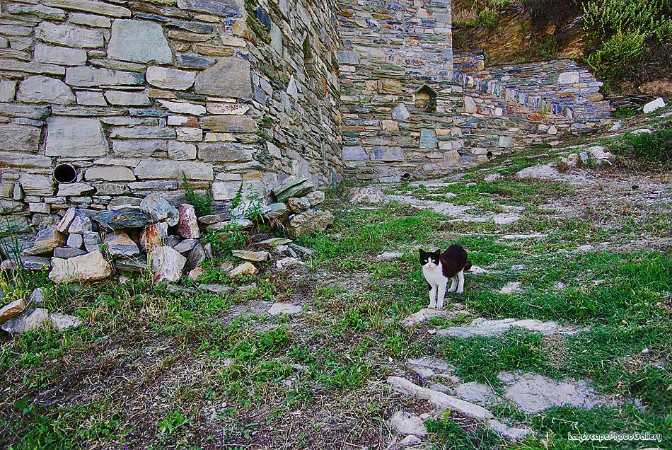 マクリニツァ村の風景~猫~