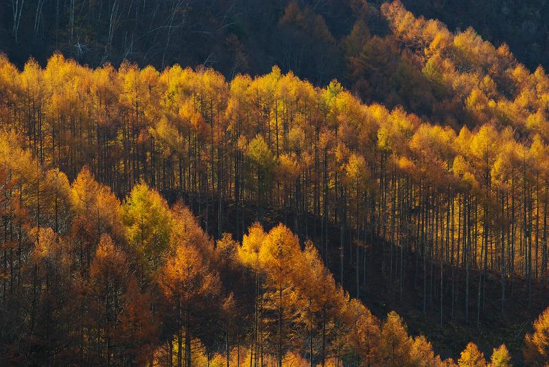 光と影の秋彩
