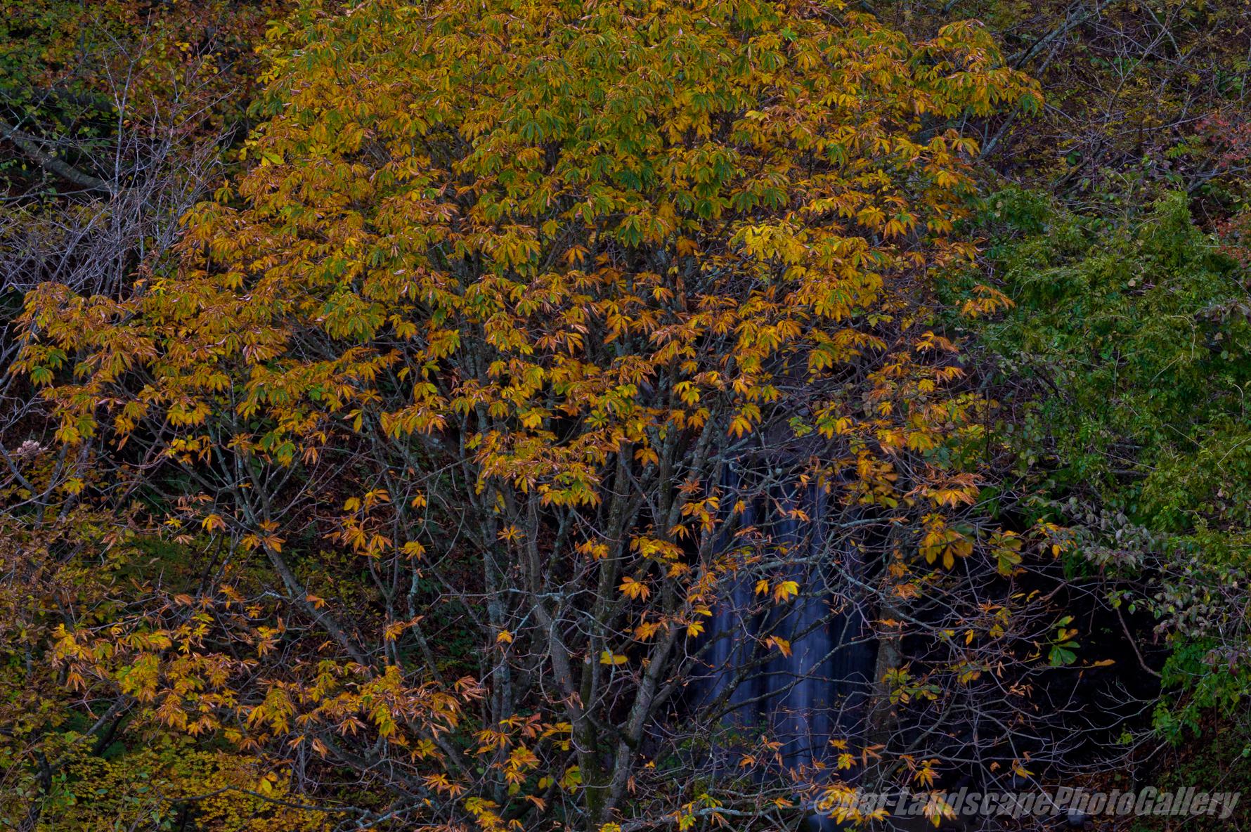 甲子温泉周辺の紅葉風景