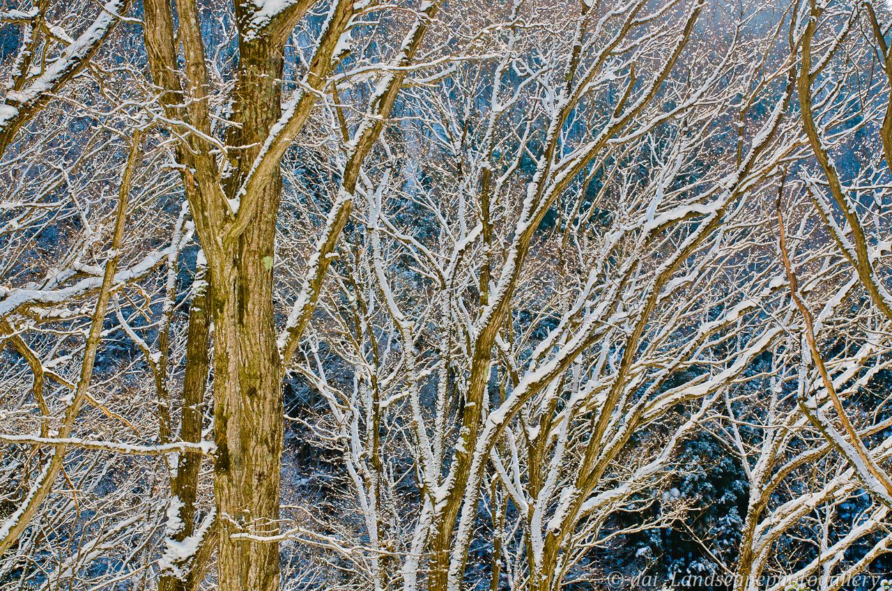 淡雪積もる森の朝