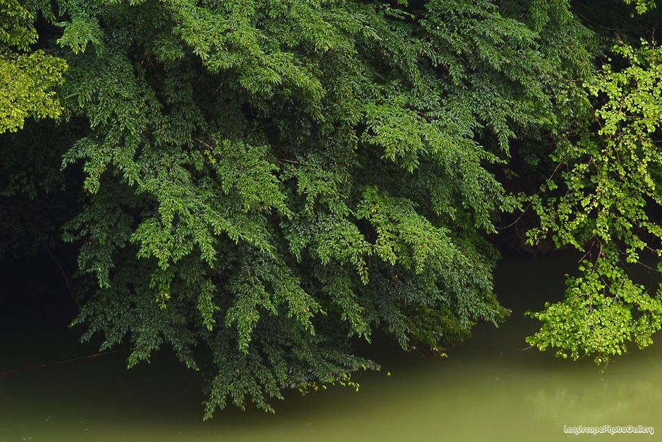 雨の奥多摩風景