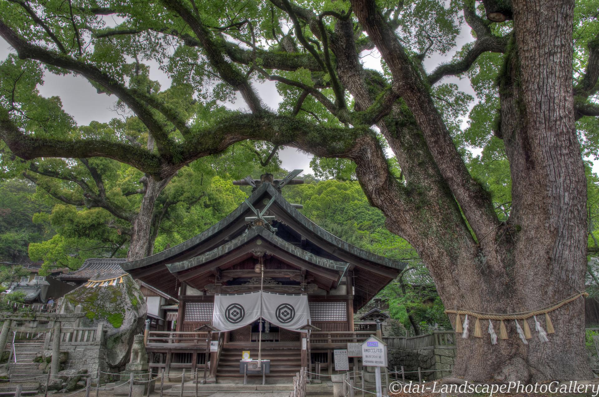 艮神社とクスノキ【HDRi】