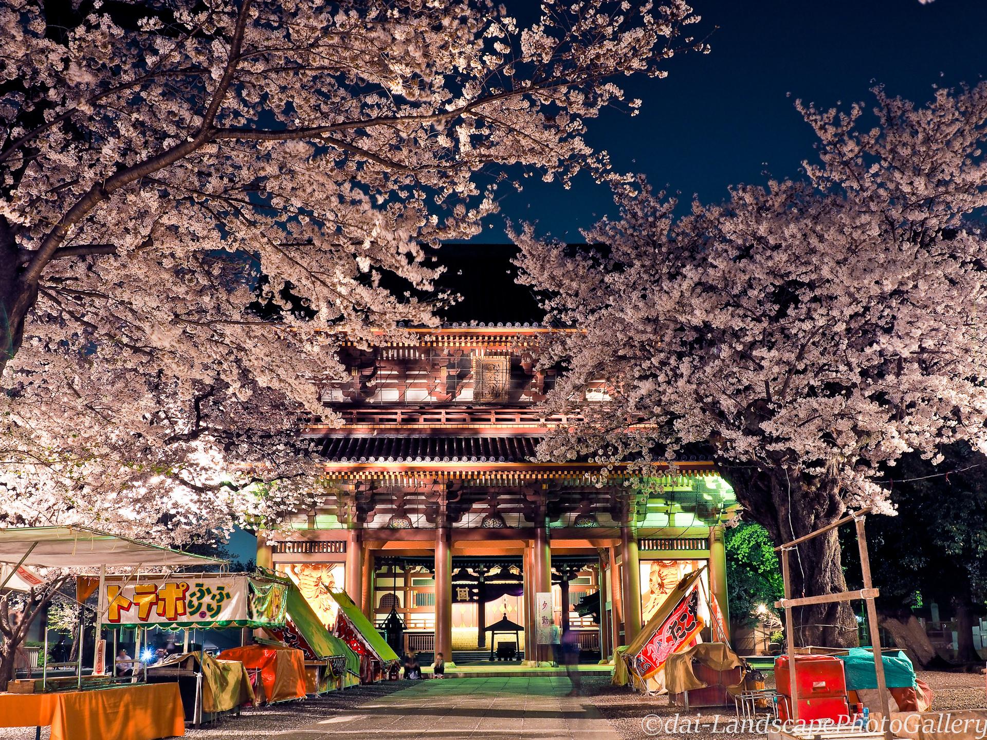 池上本門寺山門前の夜桜風景