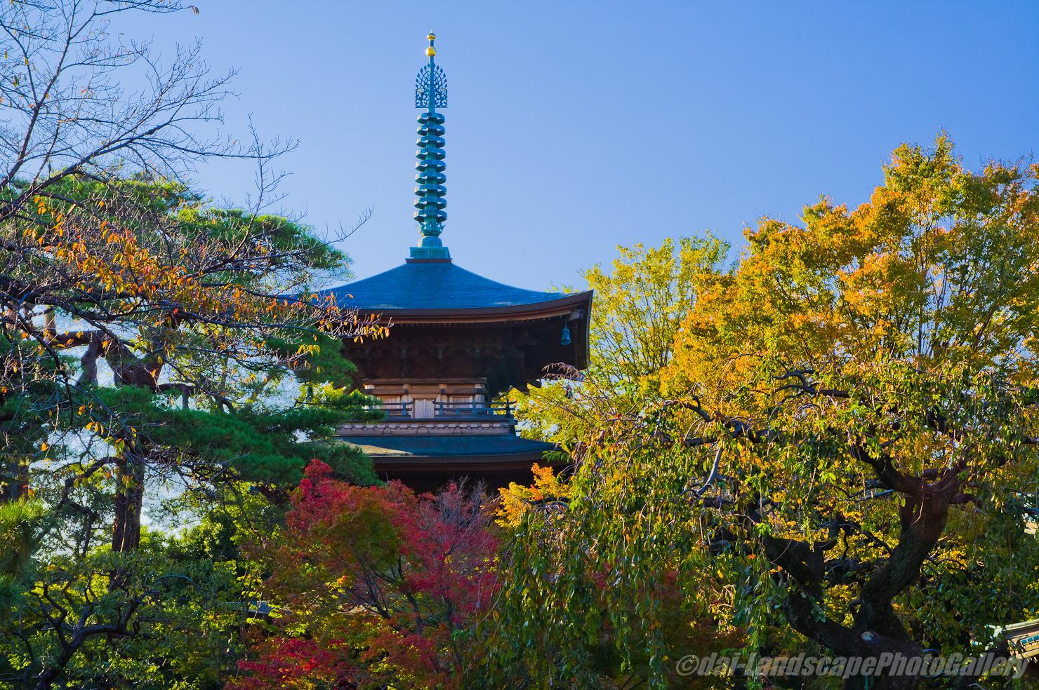秋の豪徳寺三重塔