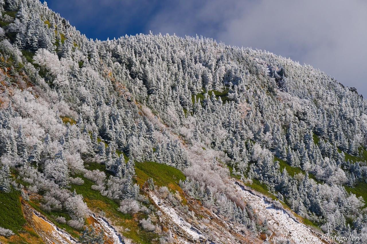 初冬の横手山