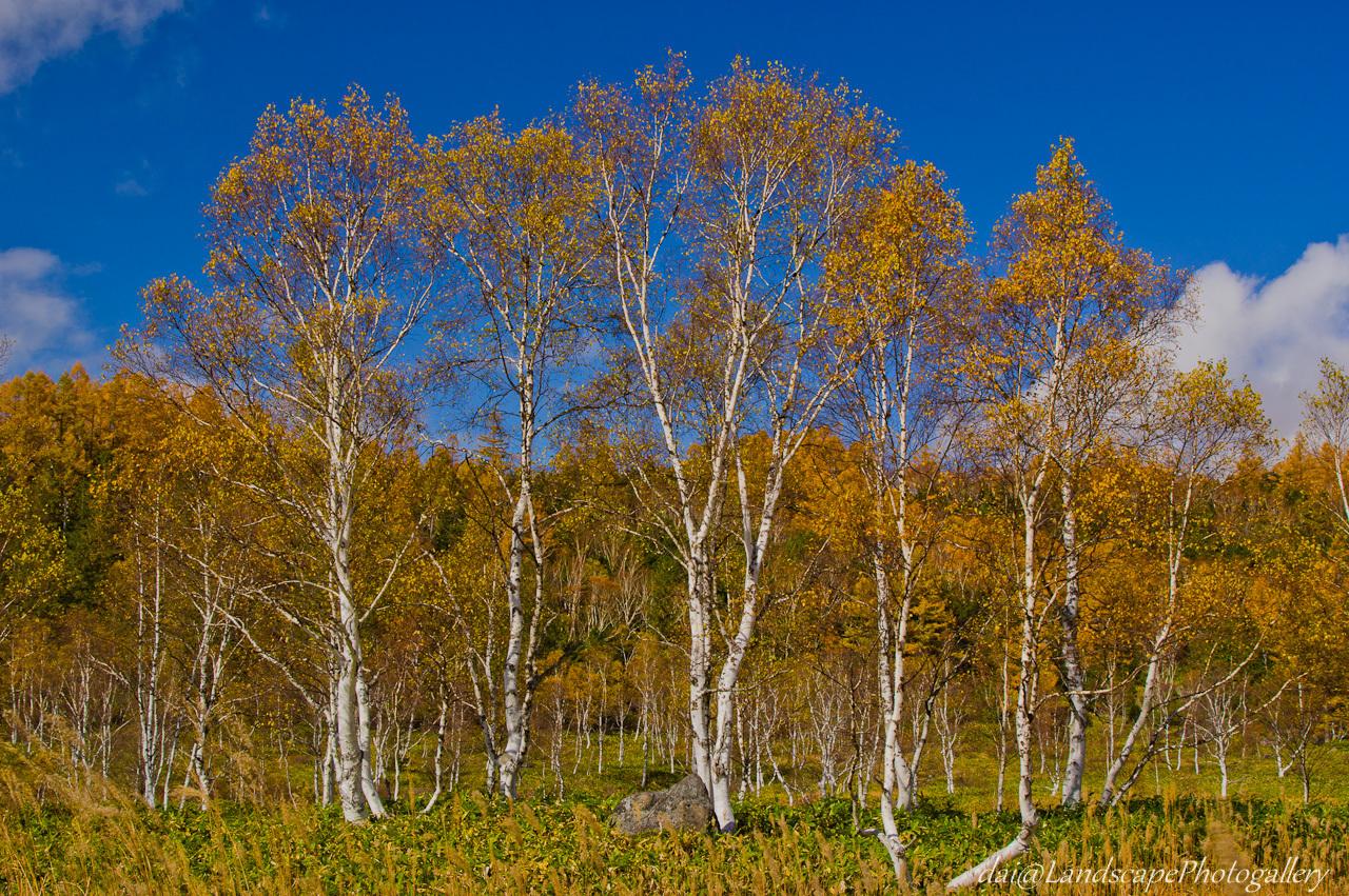 田ノ原湿原周辺の紅葉風景