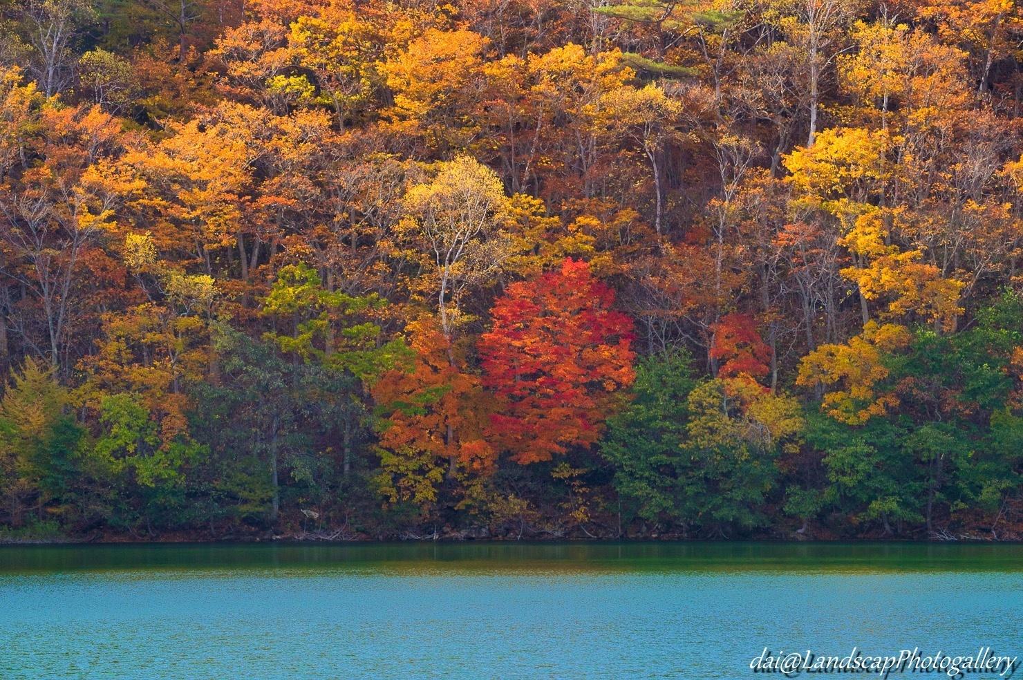 琵琶池湖畔の紅葉風景