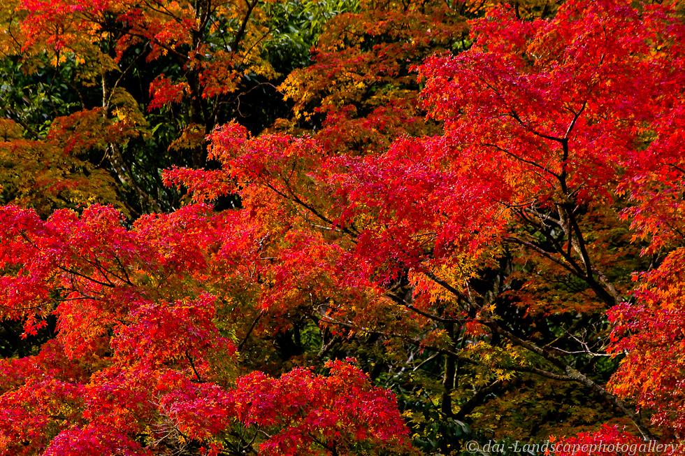 志駒川渓谷の紅葉風景 2011年