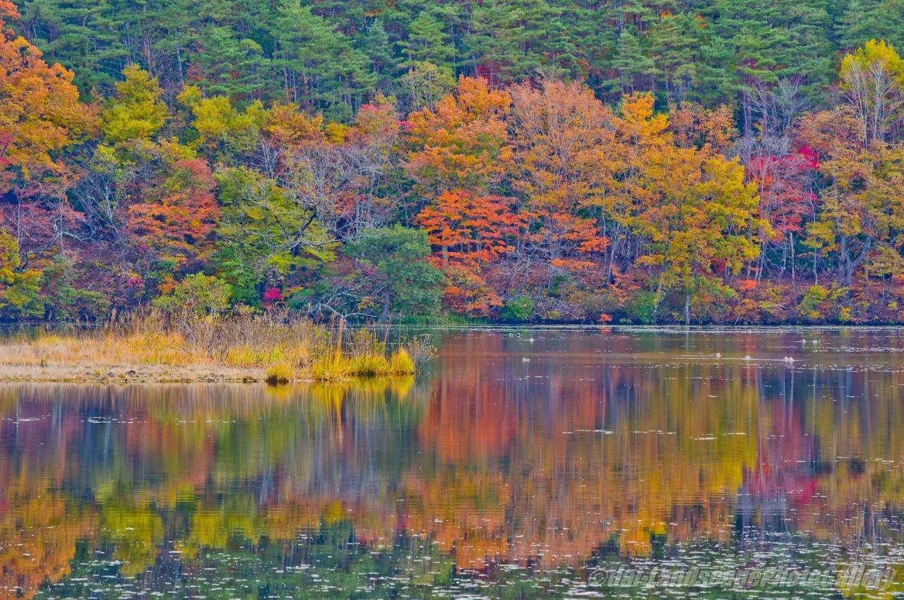 観音沼の紅葉風景
