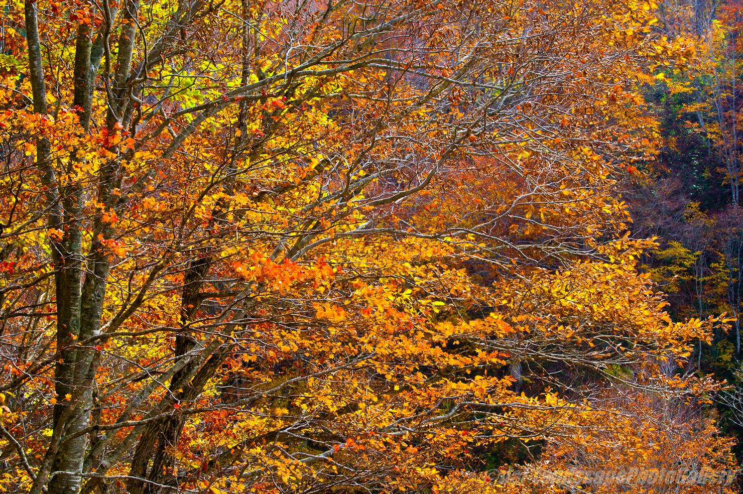 舟鼻峠付近の紅葉風景