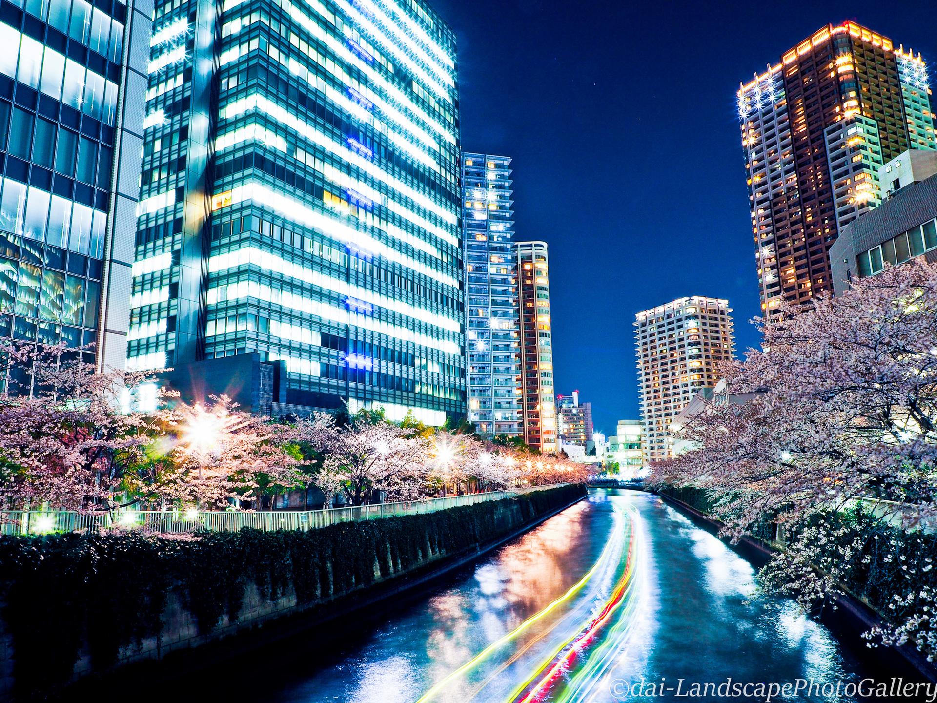 大崎 目黒川沿いの夜桜風景