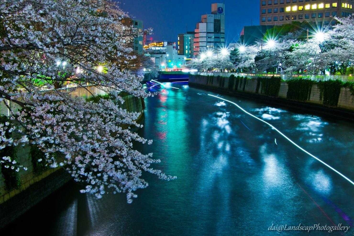 春の目黒川の光跡