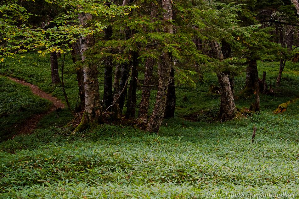 しらびそ峠付近の森