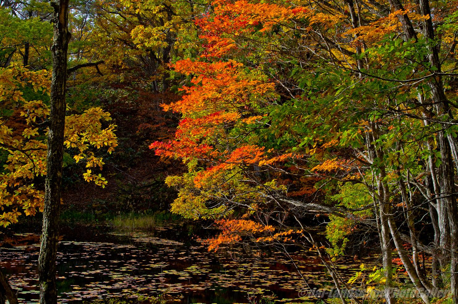 秋の矢ノ原湿原