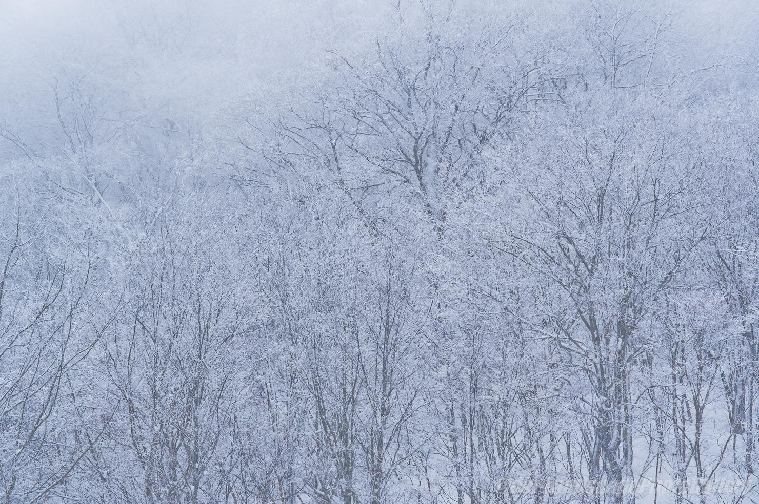 冬の舟鼻峠付近にて
