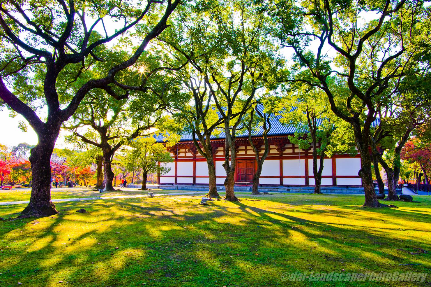 秋の朝の東寺 講堂