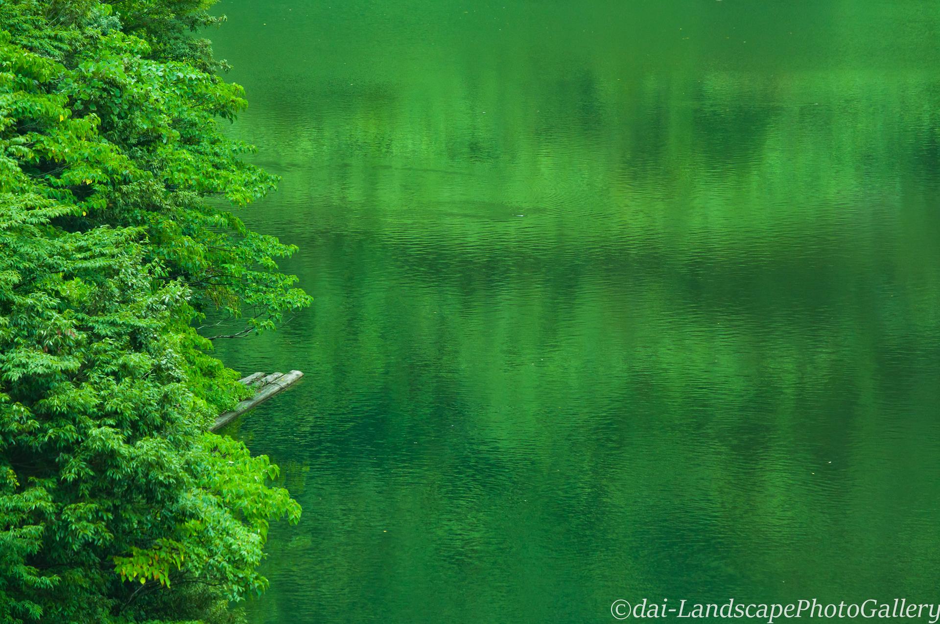 あさひ小川湖 夏の湖畔風景