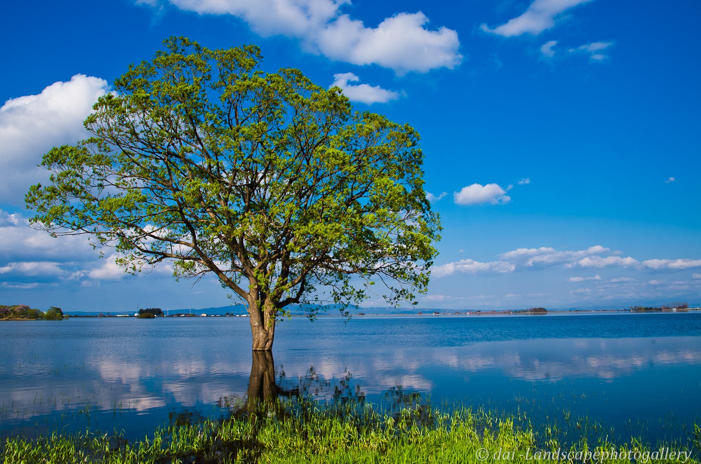 湖畔の木~津軽富士見湖にて~