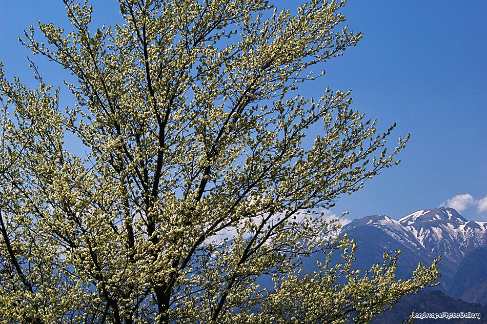 春の中禅寺湖湖畔にて