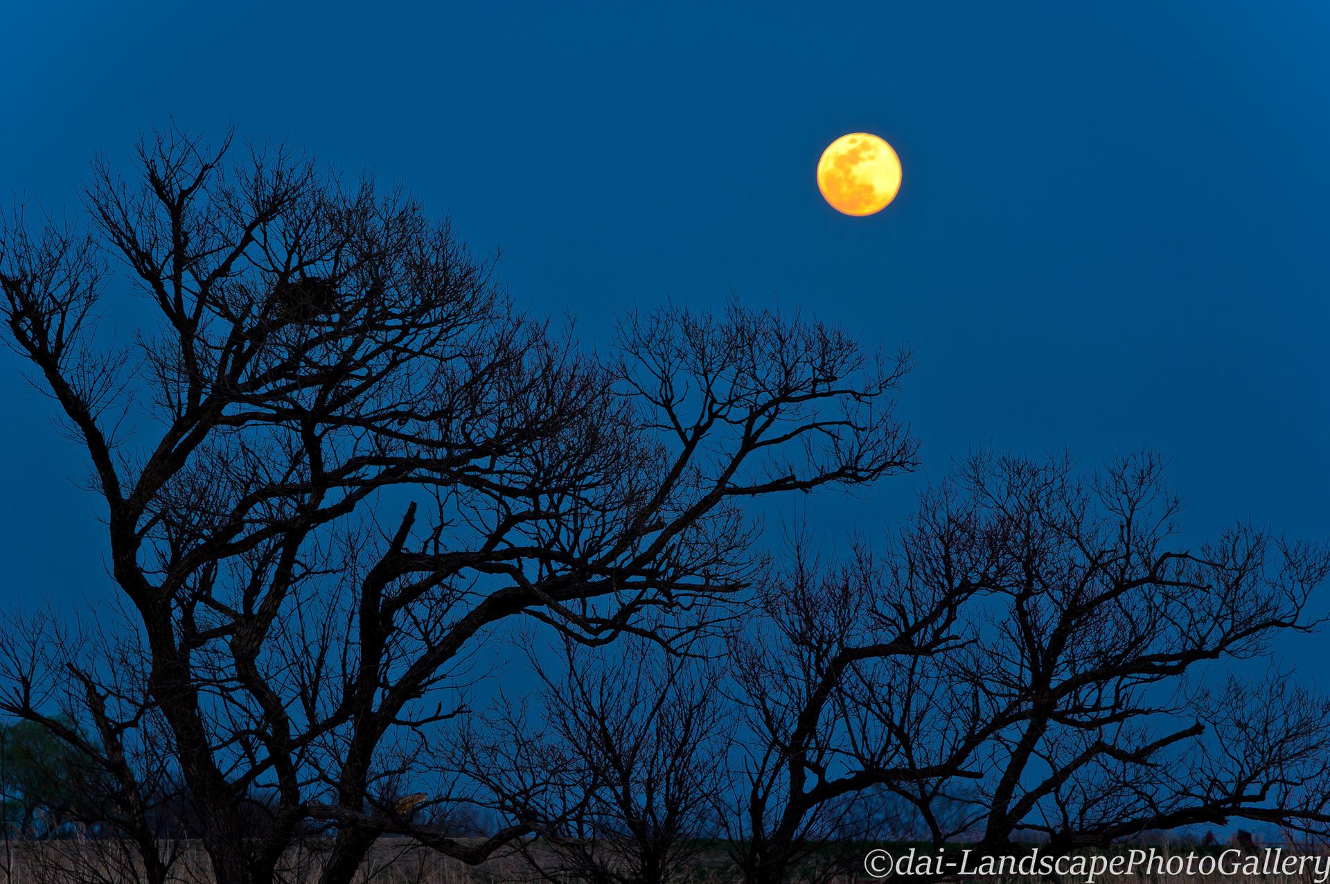 渡良瀬遊水地に昇る月